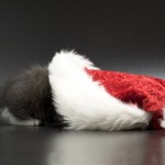 Kitten in a Santa hat