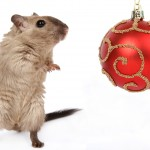 Rodent with a bauble